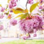 How to save time and stop spring cleaning
